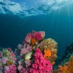 Vissen beschermen het klimaat